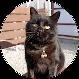 猫のビッケの写真